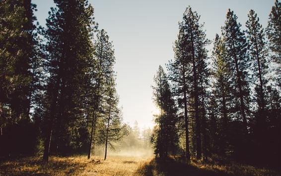 Papéis de Parede Árvores, raios de sol, nevoeiro, manhã