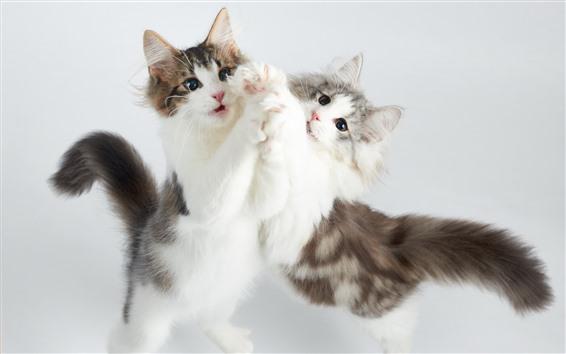 壁紙 2つのかわいい子猫、遊び心のある、突風