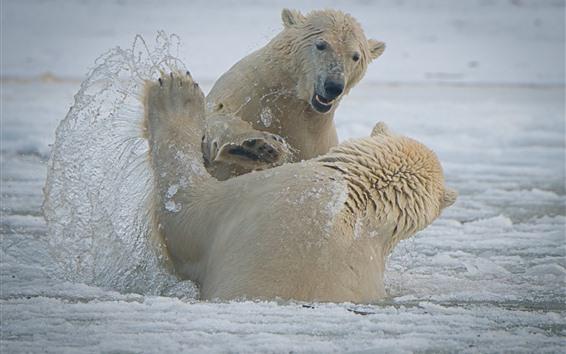 Papéis de Parede Dois ursos polares brincalhão, neve, mar