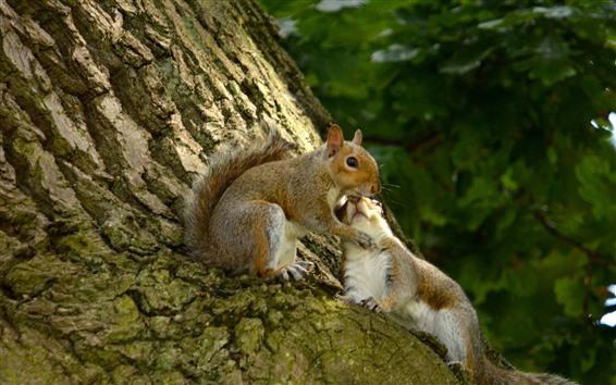 Fond d'écran Deux écureuils, arbre, brumeux