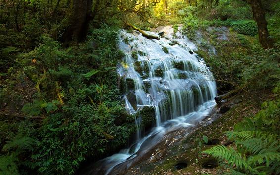 壁紙 滝、茂み、自然