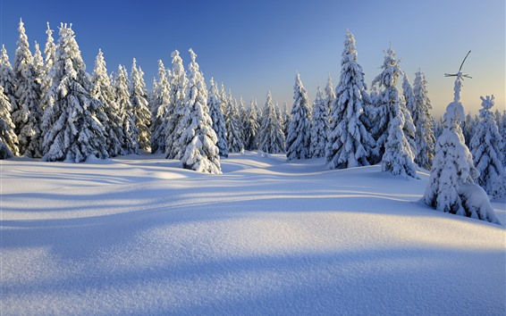 Wallpaper Winter, thick snow, trees, forest, white world