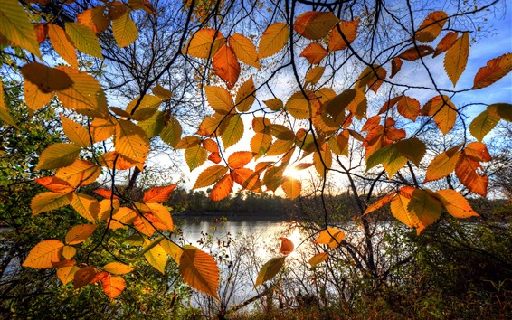 Wallpaper Autumn, yellow leaves, backlight, lake