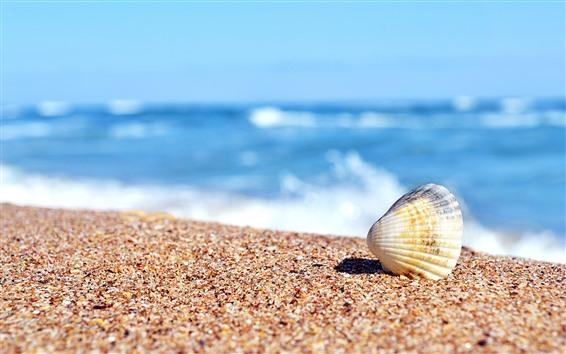 Wallpaper Beach, shell, sand, sea, hazy