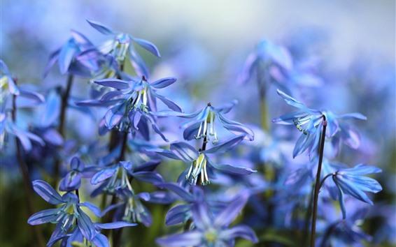 Wallpaper Blue little flowers, hazy, spring