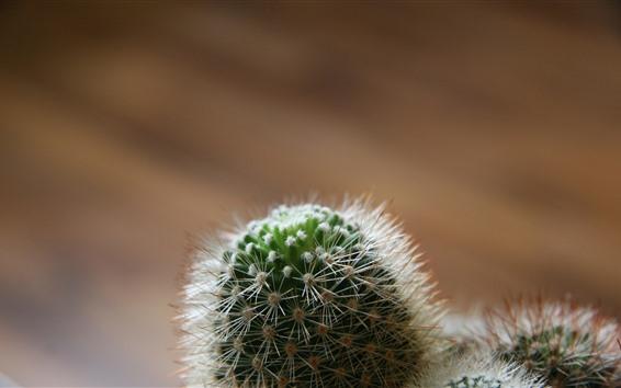 Обои Кактус, иголка, растения
