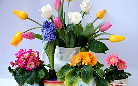 Fond d'écran Fleurs colorées, tulipes, roses, gerberas, jacinthes, primevères