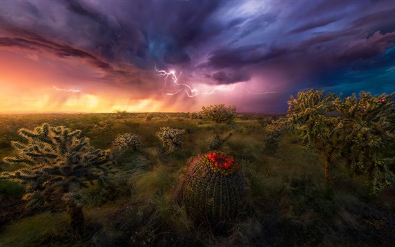 Wallpaper Desert, storm, cacti, clouds