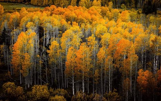 Обои Золотая осень, лес, деревья, природа, пейзажи