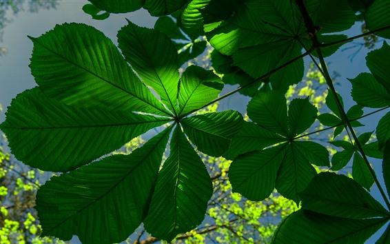 Обои Зеленые листья, подсветка
