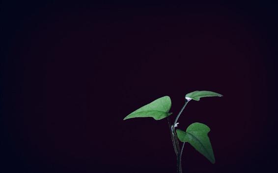Обои Зеленые листья, черный фон