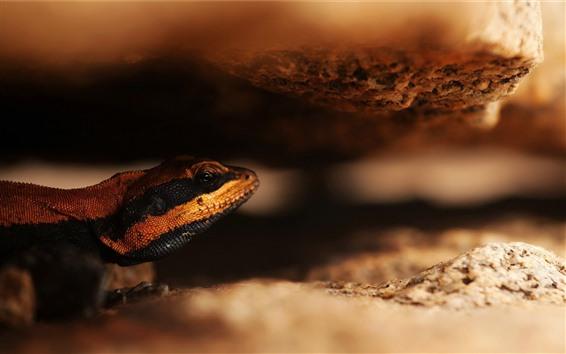 Wallpaper Lizard, hazy