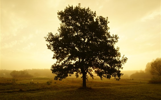 Fondos de pantalla Árbol solitario, mañana, niebla