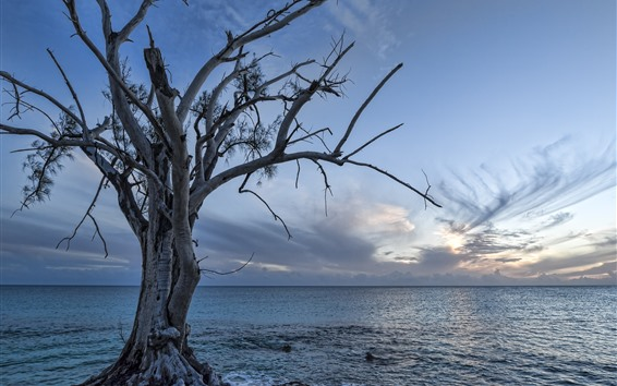 Wallpaper Lonely tree, sea, dusk, sunset