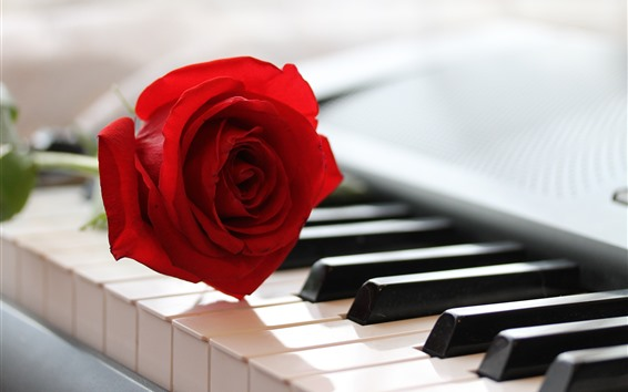 Wallpaper One red rose and piano