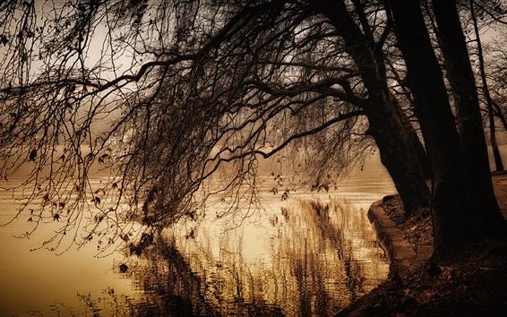 Papéis de Parede Parque, lagoa, árvores, galhos, outono