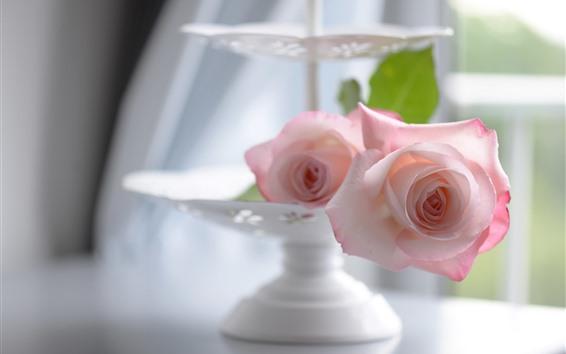 Wallpaper Pink rose, petals, hazy