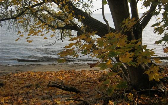 Wallpaper Poland, tree, maple leaves, lake, autumn