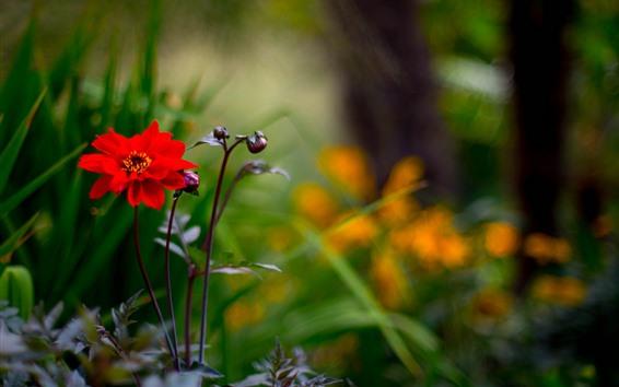 Обои Макро фотография красного цветка, кусты, природа