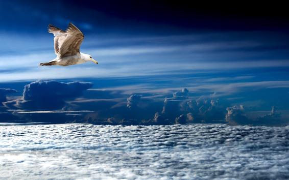 Papéis de Parede Gaivota, voo, nuvens, céu