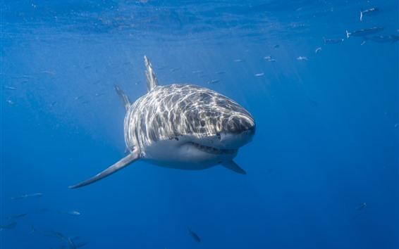 Fond d'écran Requin, mer, sous l'eau, rayons du soleil