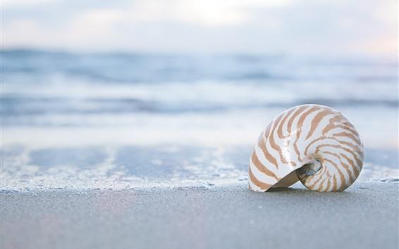 Wallpaper Shell, beach, sand, sea