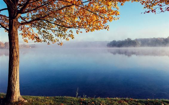 Обои Дерево, желтые листья, озеро, туман, утро, осень