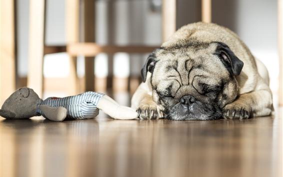 Обои Морщинистая собака во сне
