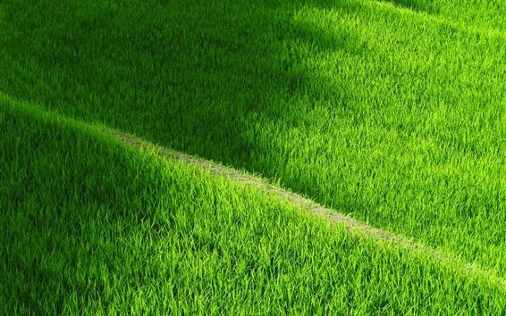 Papéis de Parede Yamada, campo de arroz verde
