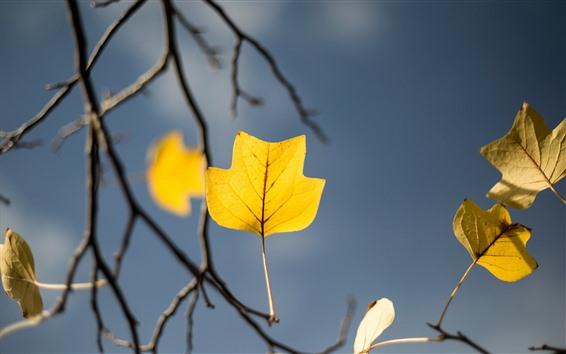 Обои Желтый лист, веточки, осень