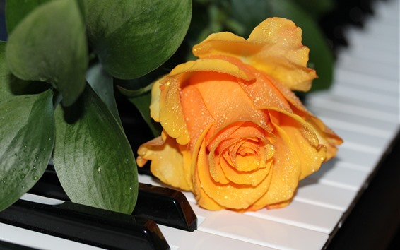Wallpaper Yellow rose, piano