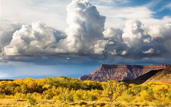 Обои Национальный парк Зайон, облака, деревья, осень, США