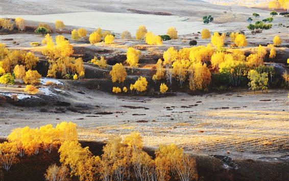 Wallpaper Bashang, golden autumn, trees