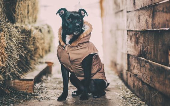 Fond d'écran Chien noir, manteau