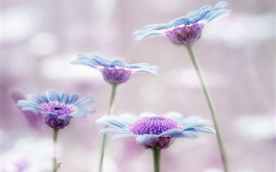 Обои Синие цветы, лепестки, художественный фон