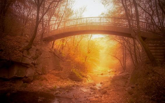 Fond d'écran Pont, automne, ruisseau, soleil, brumeux, brouillard
