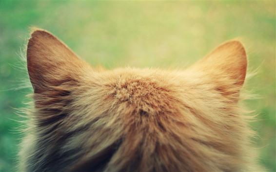 Обои Кошачий вид сзади, голова, уши