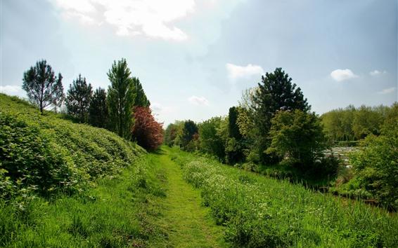 Fondos de pantalla Campo, hierba verde, arbustos, árboles