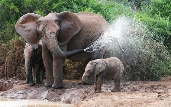 Fondos de pantalla Elefantes, familia, salpicaduras de agua