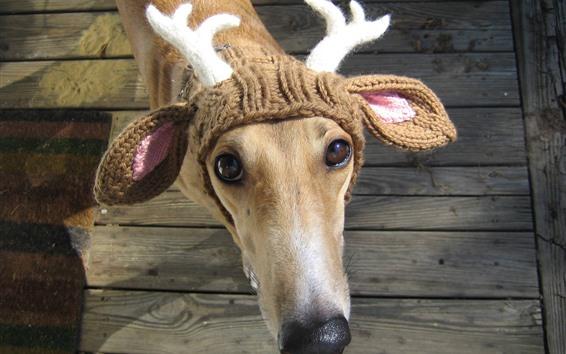 Wallpaper Funny dog, deer, horn