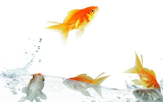 Papéis de Parede Peixinho, água, salpicos, salto, fundo branco