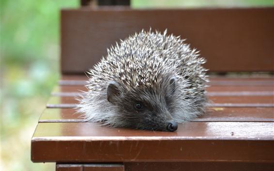 Wallpaper Hedgehog, bench