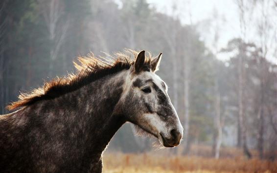 Обои Лошадь, лицо, грива