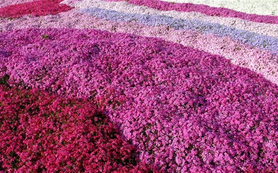 Papéis de Parede Muitas flores rosa fundo, camadas de cor