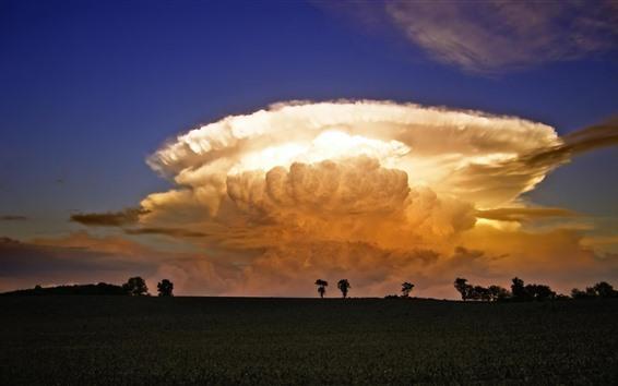 Papéis de Parede Cogumelo, nuvens, campo, campos, anoitecer