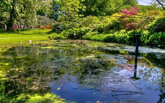 배경 화면 연못, 나무, 공원, 여름