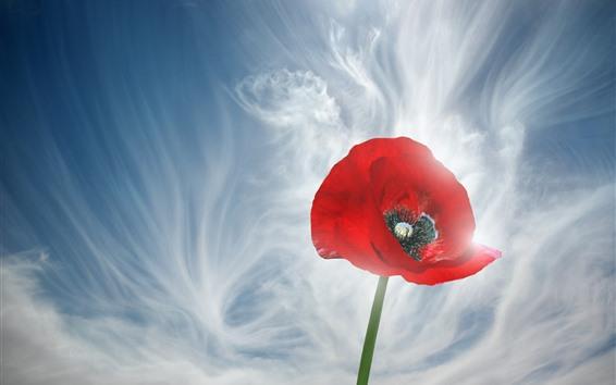 Fondos de pantalla Primer plano de flor de amapola roja, cielo, nubes blancas