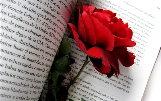 Papéis de Parede Rosa vermelha, livro
