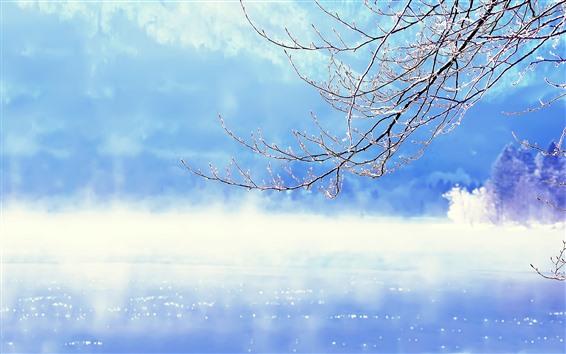 Wallpaper Slovenia, winter, twigs, snow, lake, fog, morning, winter