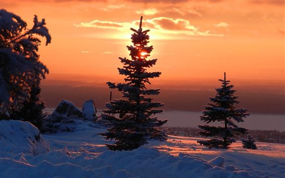 Papéis de Parede Árvores, neve, inverno, nascer do sol, céu vermelho